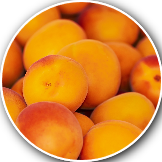 stone fruit crop