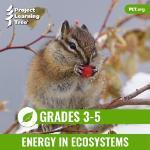 Image for Energy In Ecosystems eUnit