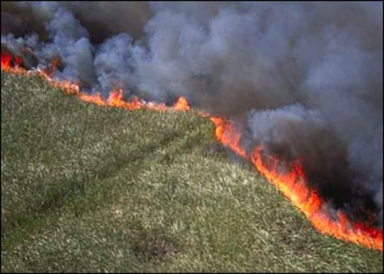 Aerial view of a fireline.
